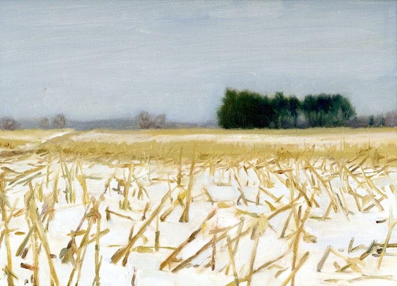 Cornstalks in Field