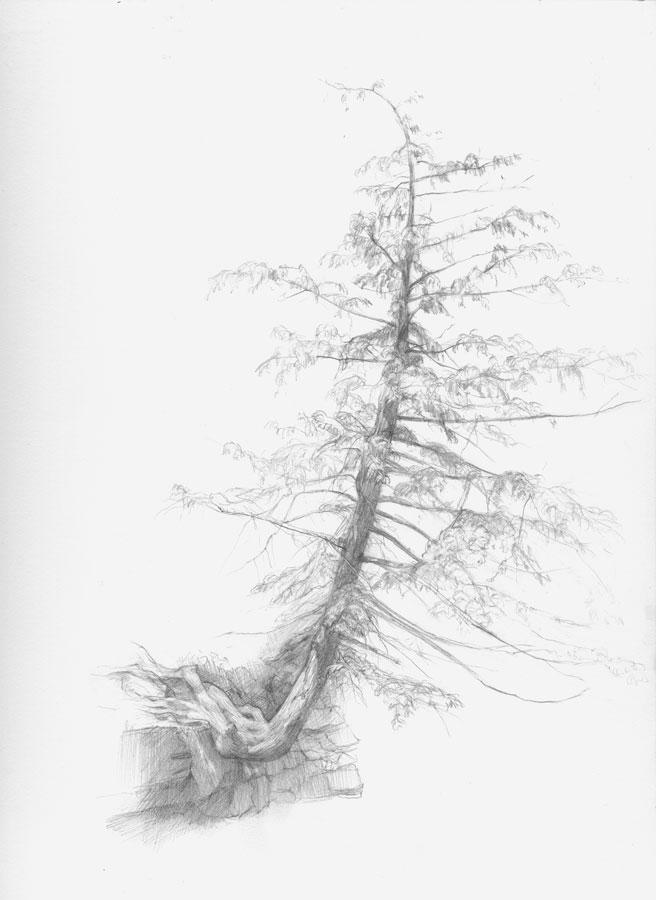 Schoharie Creek Tree