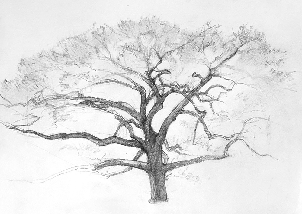 """Drawing Trees"" at CAW"